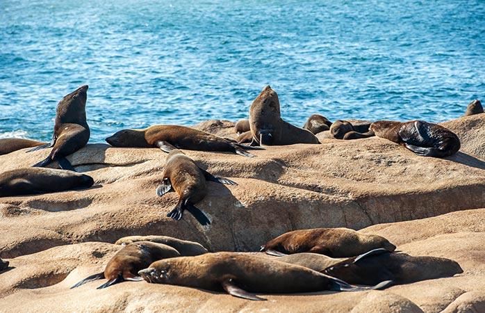 """In Cabo Polonio worden bezoekers op hun vakantie in Zuid-Amerika voorgesteld aan de beroemde """"bewoners"""": de zeeleeuwen van het gebied"""