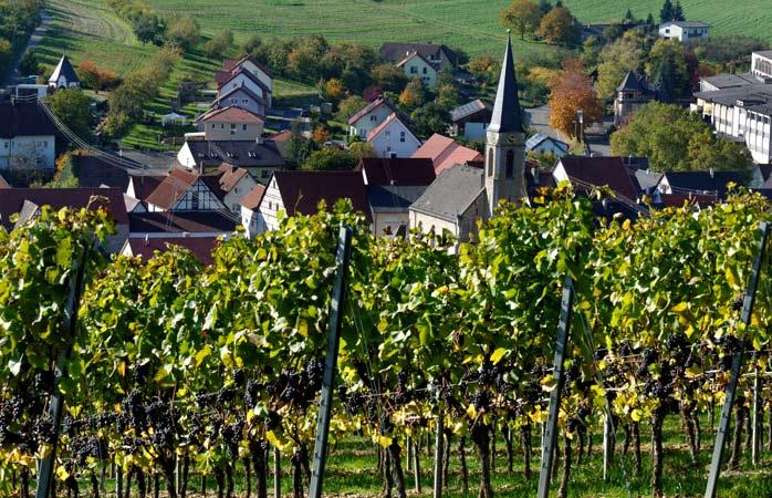 Het is heerlijk wandelen tussen de vele wijngaarden van Lauda-Königshofen