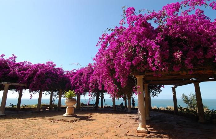 Een bloementuin in fuchsia-tinten met uitzicht over de kust in Maputo.